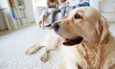 6 dicas para seus pets viverem bem em apartamento