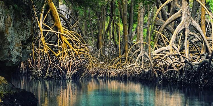 La flora dominicana en la lucha contra el cambio climático