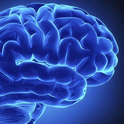 descubren que el cerebro monitoriza el crecimiento del cuerpo y corrige las alteraciones