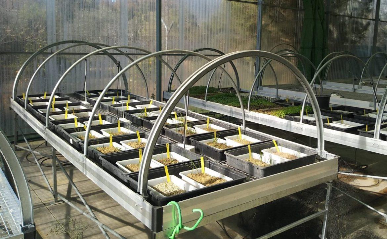 proyecto para implantar cubiertas herbáceas en el olivar
