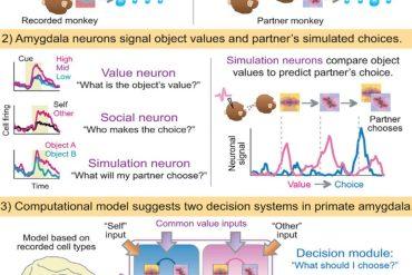 Las-neuronas-Mindreading-un-tipo-especial-de-células-cerebrales-capaces-de-tener-expectativas-sobre-el-comportamiento-ajeno