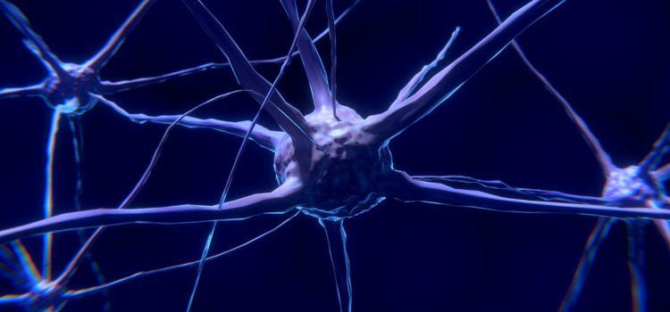 proteína cerebral promueve la interconectividad neuronal