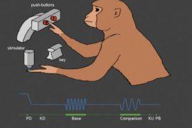 predecir las áreas cerebrales a estimular para forzar la transición de un estado cerebral a otro