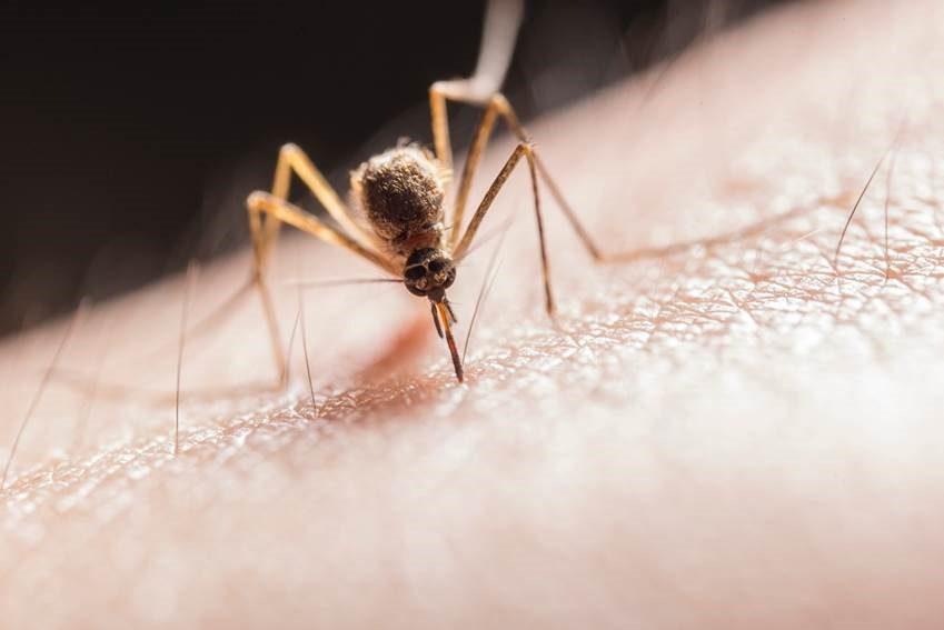csic – la malaria más mortífera llegó a europa desde la india