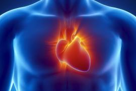 umh-csic mecanismo que sitúa el corazón a la izquierda