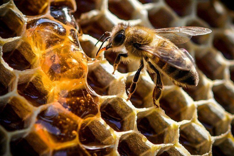 Verdad de la miel