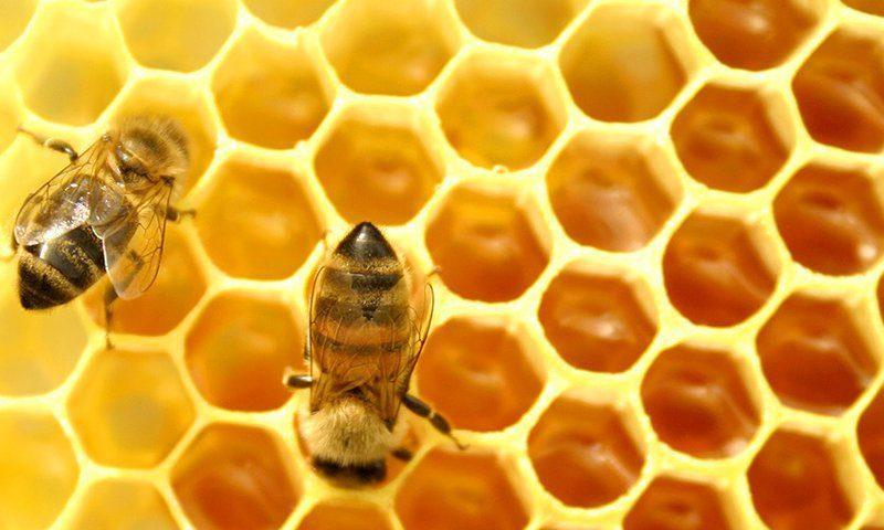 La Verdad de la miel