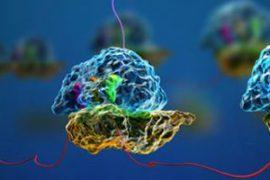 csic, descubrir cómo las células tumorales producen ribosomas para crecer más rápidamente