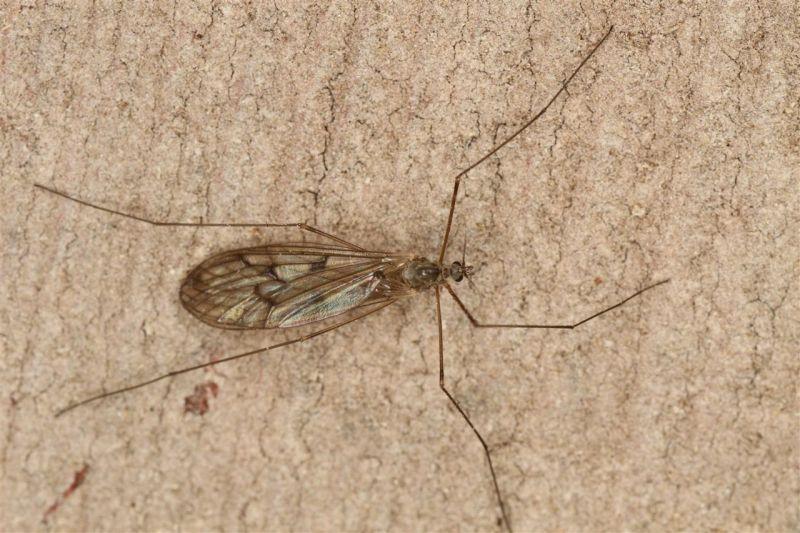 uam detectan mosquitos que invaden la antártida