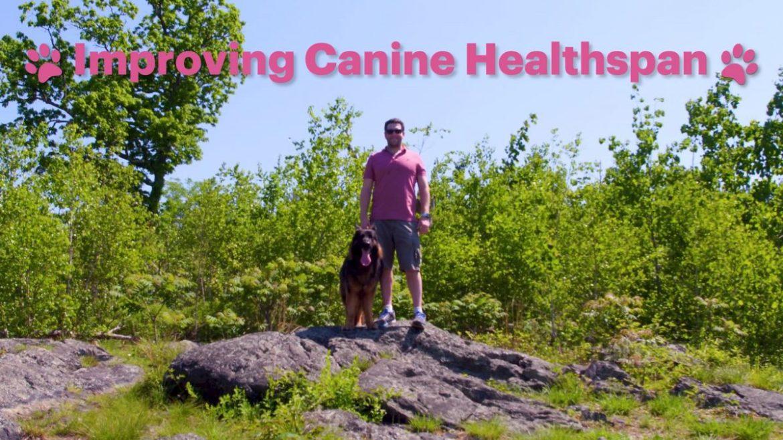 Wyss, ayudar a los perros a vivir vidas más largas y saludables