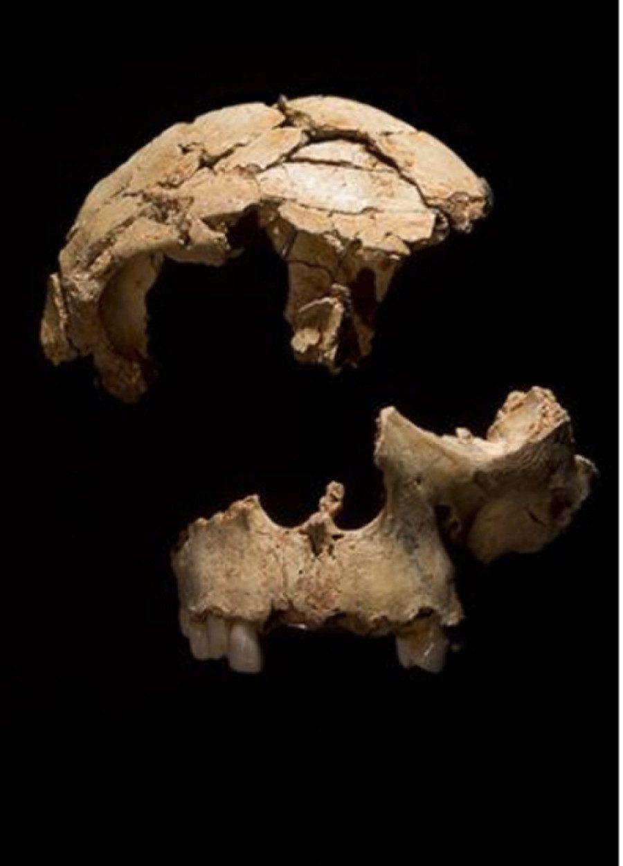 evidencia genética humana más antigua de antepasados