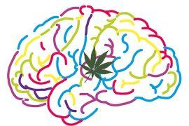 los efectos de los cannabinoides en el sistema nervioso