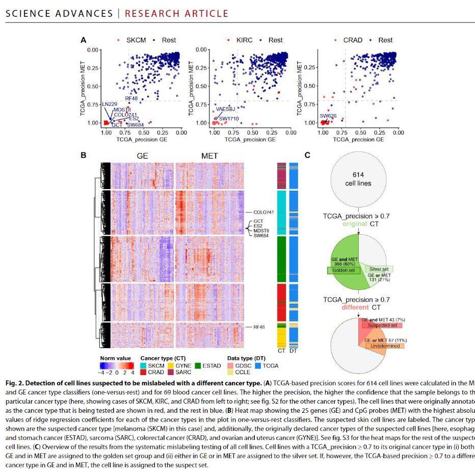 líneas celulares utilizadas en la investigación del cáncer