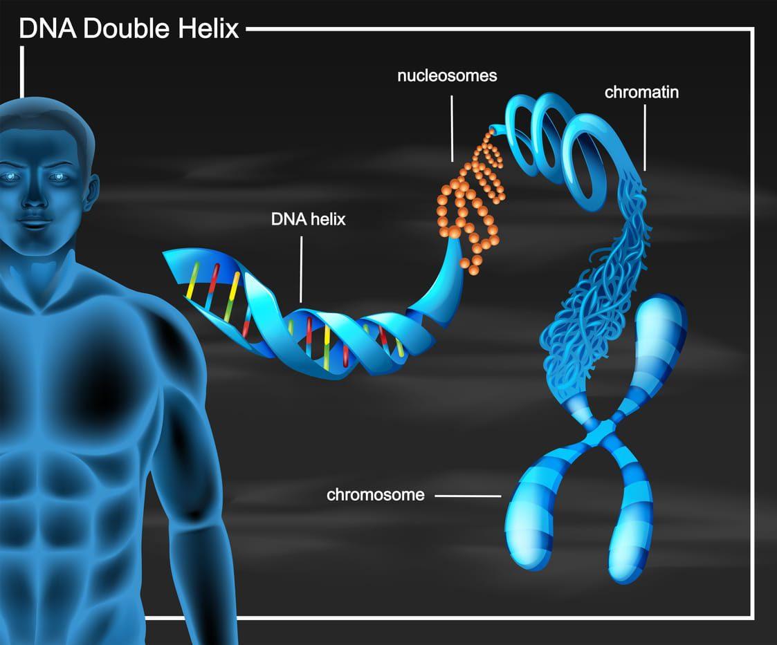 ADN mas detalle