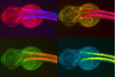 cómo las células construyen organismos