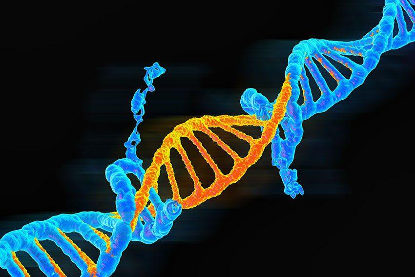 Origenes de la mutacion revela variaciones geneticas