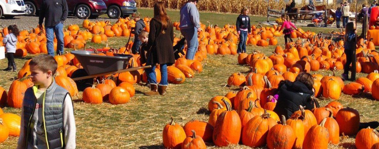 pumpkin 995416 1280