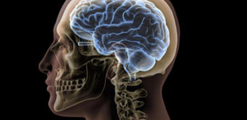Entender el cerebro para apaliar sus enfermedades1