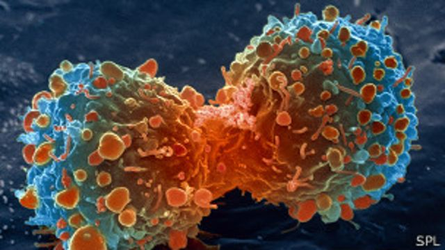 Estrategias contra el cancer en el sistema inmunologico2