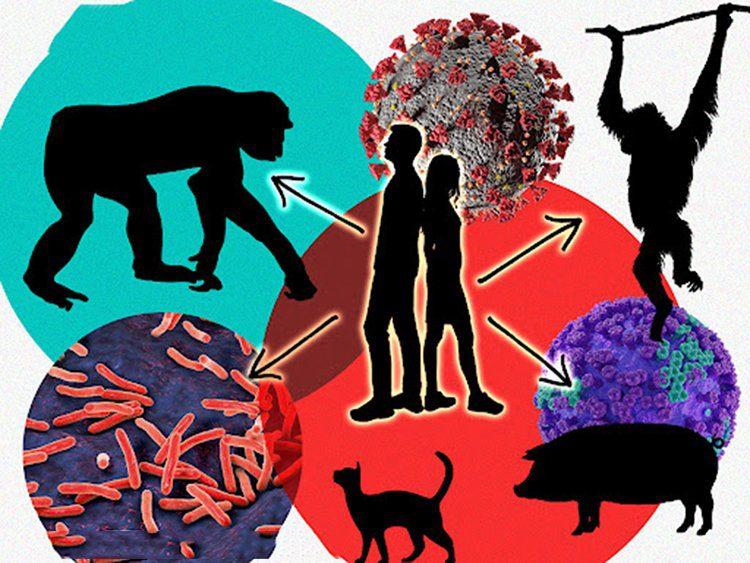 Identificar al proximo virus de animales a humanos
