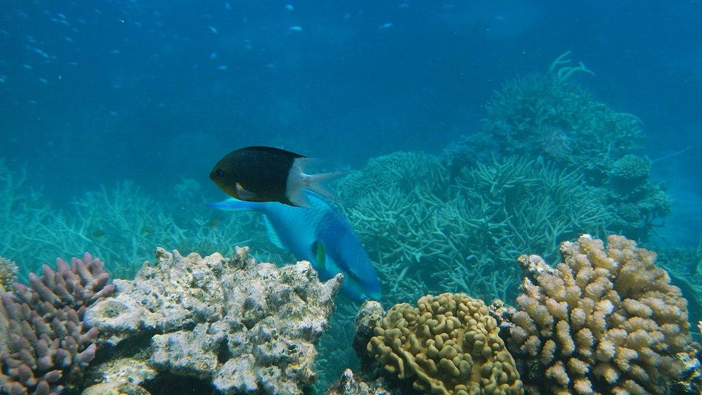Cientistas descobrem por que há tanta biodiversidade nos oceanos - Planeta