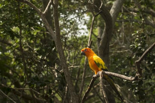 Amazônia pode ter 90% da fauna ameaçada pelo calor em 2050 - Planeta