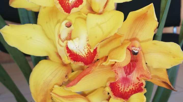 Pirapó, Itapúa: La Capital de la Orquídea de fiesta