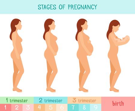 Calculadora de embarazo semana a semana