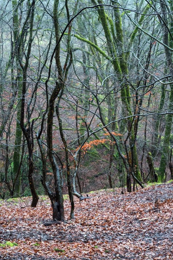 Hyrcanian forest, southern Azerbaijan, 18/2/16.