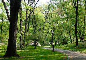 McGowans Pass in Central Park