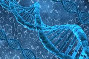 DNA double helix MTHFR gene folate folic acid