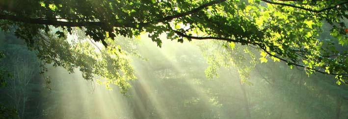 Le sacré est un état de conscience qui permet de voir au-delà des apparences
