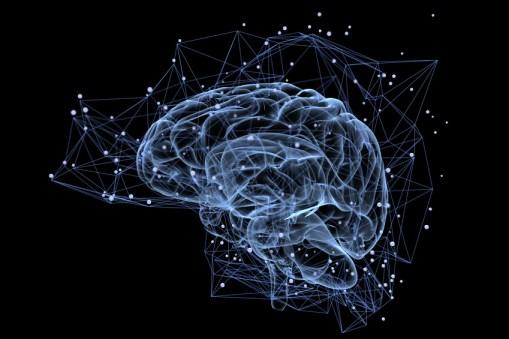 Neuroplasticité du cerveau et sa capacité de régénération constante