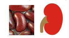 Les haricots rouges ont une forme semblable aux reins humains.