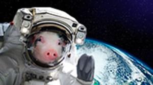 Le Cochon est appelé « étoile vagabonde », ce qui favorise les déplacements et les voyages. Cette tendance peut s'avérer positive pour l'industrie du tourisme.