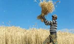 La plantation à l'origine des problèmes agricoles de l'Afrique ?