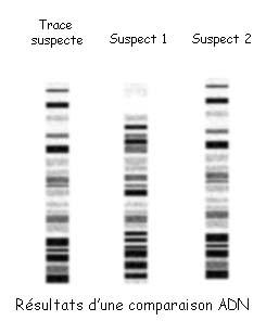 » Vers un portrait-robot génétique ? Le profil