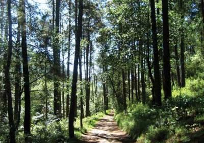 Corazón del Bosque (Heart of the Forest)