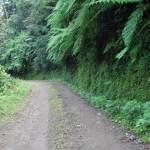 Camino verde (San Pedro Yepocapa) —Luis Josue Poz Jimenez