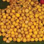 The nance fruit is used in desserts, the juice is used for flavoring beverages and the rind makes a textile dye