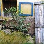Sabe Rico (La Antigua) —Antoinette Golbus