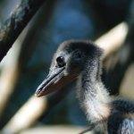 Baby bird (Lake Atitlán) —Anamaría Ruata