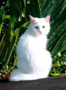 Posición/Position: Mención honorífica / Honorable mention Tema/theme: Mascotas guatemaltecas / Guatemalan pets Título/title: La Gata Tsuki / Tsuki the cat Lugar/place: Escuintla  Autor/author: Sergio Molina
