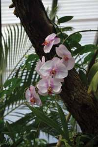 Orchids are just part of the beauty of Blue Harbor Tropical Arboretum