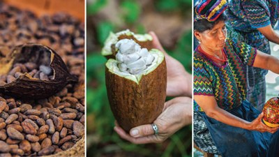 Guatemalan chocolate