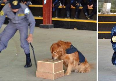 sniffer dogs Guatemala