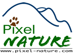 Association Pixel Nature