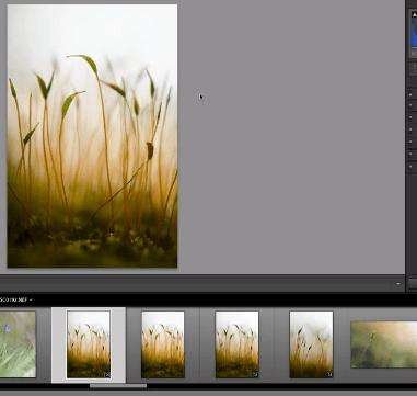 Réduire les aberrations chromatiques avec Lightroom ou Photoshop
