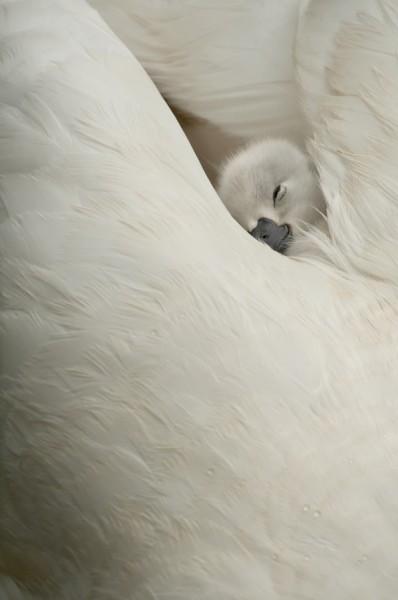Lauréat RevuePhoto : Olivier Mattelart - Innocence
