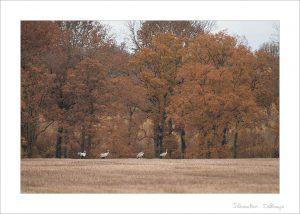 Couleurs d'automne - Paramètres prédefinis de Lightroom